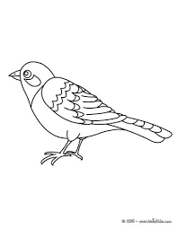 toucan bird coloring pagedownload printable animal coloring