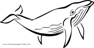 Whale Color Page Whale Color Page