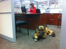 Comfort Pet Certification Service Dog Wikipedia