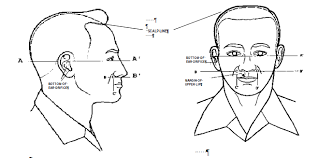 air force female hair standards by order of the secretary of the air force air force instruction 36