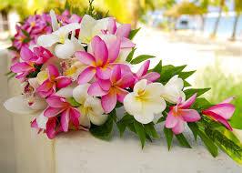 matrimonio fiori fiori tropicali per un matrimonio esotico come usarli e abbinarli