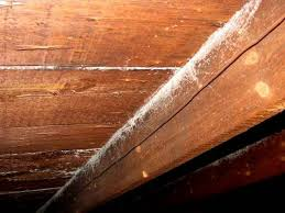 how to remove white spots of wood furniture is white mold dangerous how to get rid of white mold
