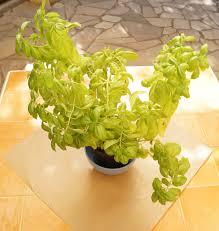 decoration avec des pots en terre cuite diy customiser son pot de fleur jeanne s u0027amuse