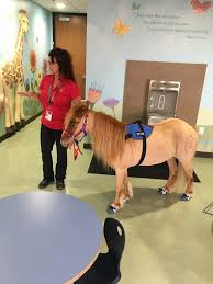 local therapy horse wins u0027hero award u0027 for work with children