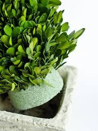 Herb Topiaries How To Make Boxwood Christmas Topiaries Hgtv