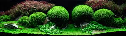 aquarium design exle the incredible underwater art of competitive aquascaping colossal