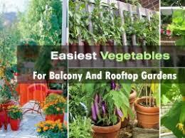 rooftop terrace gardening archives balcony garden web