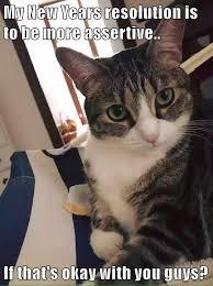 Grumpy Cat New Years Meme - new years cat meme years best of the funny meme