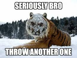 Tiger Meme - 25 very funny tiger pictures