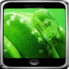 a green snake wallpapers green snake wallpaper android apps on google play