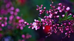 Small Wallpaper by Small Pink Flowers Ultra Hd Wallpaper Download For Desktop