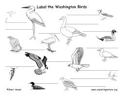Washington birds images Washington habitats mammals birds amphibians reptiles jpg
