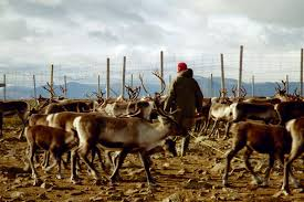 the history of human interactions with caribou
