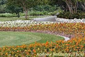 flower garden ideas design tips for edible flower gardening