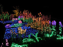 Zoo Lights Pictures by Freestyle Fridays Holiday Bucket List Amy And The Great World