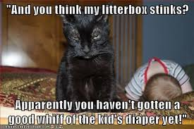 Funny Kitten Memes - lolcats babies lol at funny cat memes funny cat pictures