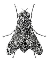 incredibly intricate renaissance style insect drawings by alex