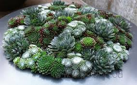 succulent planters 10 unforgettable succulent planter arrangements