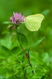for all of us chasing yellow butterflies into fall u2013 with all her
