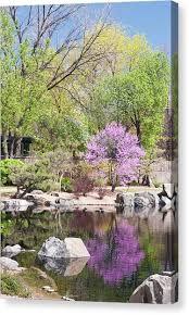 Denver Botanic Gardens Denver Co Denver Botanic Gardens Canvas Prints America