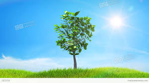 tree growing on a green hill with the sun and clou stock animation