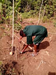 recession backyard farm to the rescue my agric world