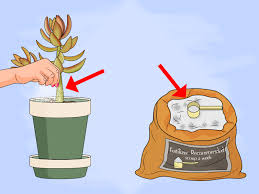 how to propagate succulent plant cuttings with pictures
