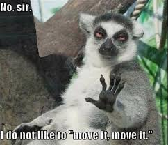 Wednesday Meme - 15 lemur memes that will make your wednesday so much better i can