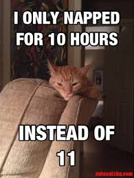 The Struggle Is Real Meme - the struggle is real cute cats hq pictures of cute cats and