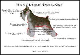 schnauzer hair styles sch groom chart 468 jpg