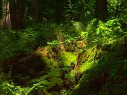 Deep Forest Green Deep Forest World Mix Youtube