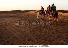dubai camel stock images royalty free images u0026 vectors shutterstock