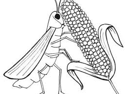 100 egyptian coloring pages costume hunter ancient egypt