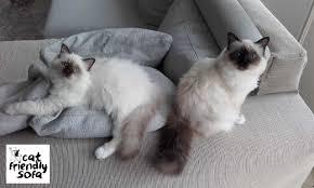 gatti divani copridivano antigraffio cat friendly sofa