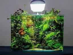 nano aquascape aquascape nano aquascape ideas
