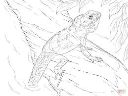 terrific chinese water dragon coloring page with chinese dragon