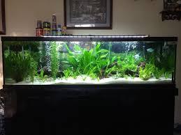 10 gallon planted tank led lighting 125 gallon freshwater planted aquarium tropical fish site