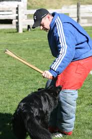 belgian sheepdog training obsidian belgian sheepdogs caring for the high performance dog