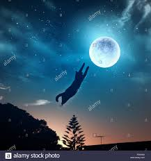 image of cat in jump catching moon stock photo 94344936 alamy