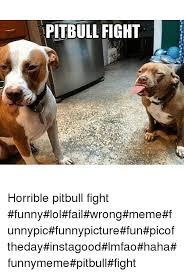 Funny Fight Memes - pitbull fight horrible pitbull fight