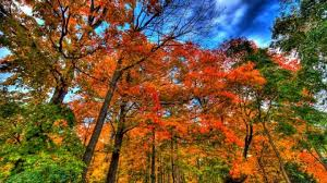 why do leaves change color in fall iflscience