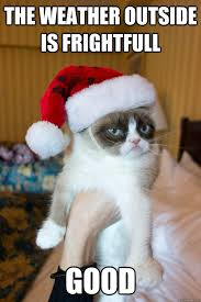 235 best grumpy cat images on pinterest funny things cute kittens