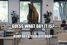 Hump Day Camel Meme - guess what day it is hump day your birthday hump day camel