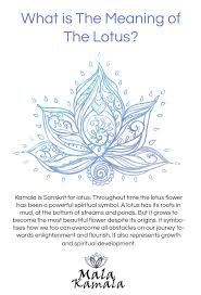 what is the significance of the lotus what does the lotus