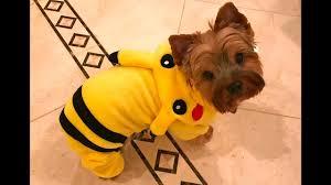 Yorkie Costumes Halloween Pokémon Pikachu Halloween Costume Yorkie Puppy