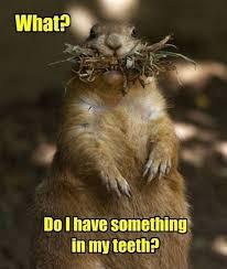 Clean Animal Memes - 40 funny animal memes 4 funoramic