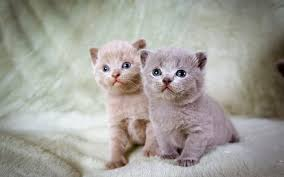 download wallpaper 2560x1600 kittens couple beautiful sitting