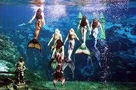mermaids to return to south carolina aquarium business