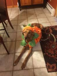 Vizsla Halloween Costume Nathalie Cake Stand Brunch Easter Brunch Brunch Buffet