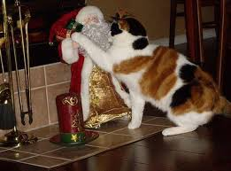 u0027s kitty christmas baba recommends babamail